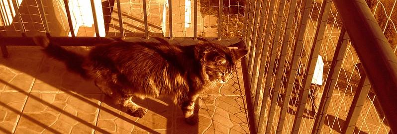 Zabezpieczenie psów/kotów